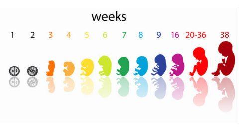 Bir Bebeğe Sahip Olmanın Aşamaları