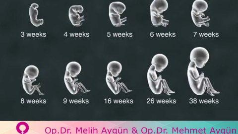 Laboratuvar ortamında yapay embriyo üretildi
