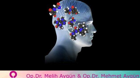 Beyin – Merkezi Sinir Sistemi